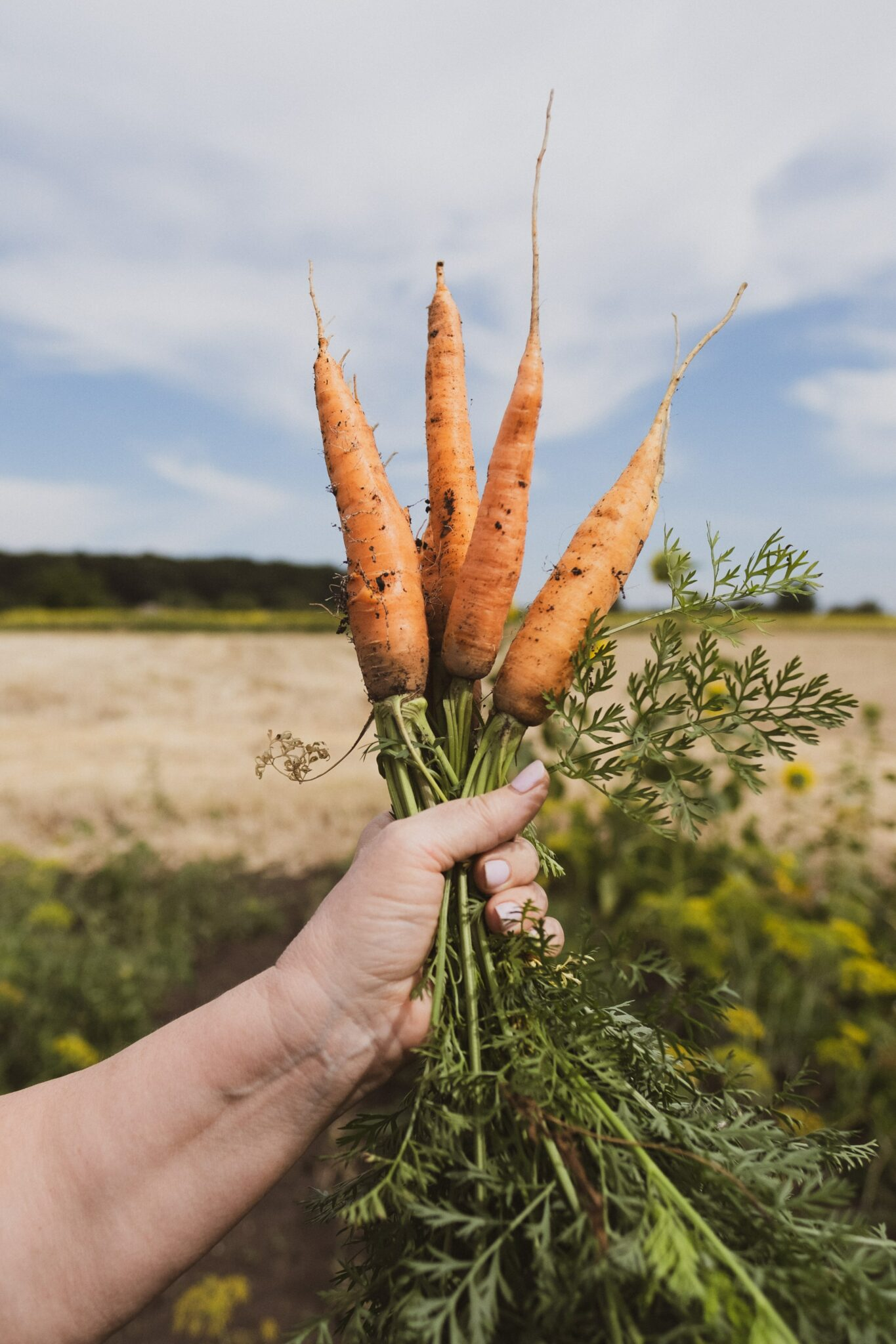 carrots in skincare